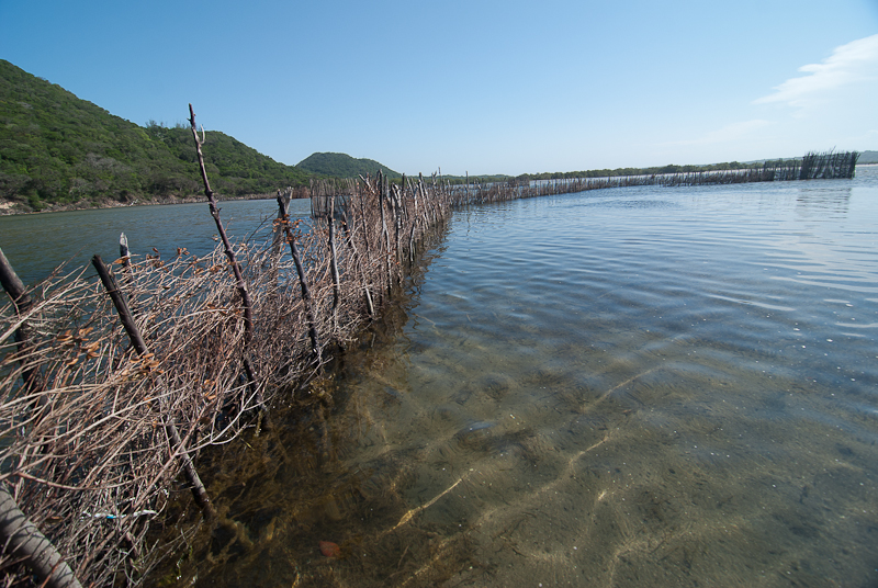 more tongan fishing traps