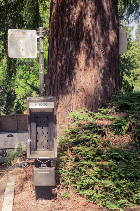 pay phone and redwood